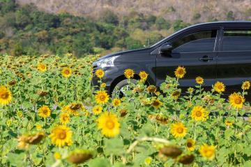 Mantenimiento del coche en primavera